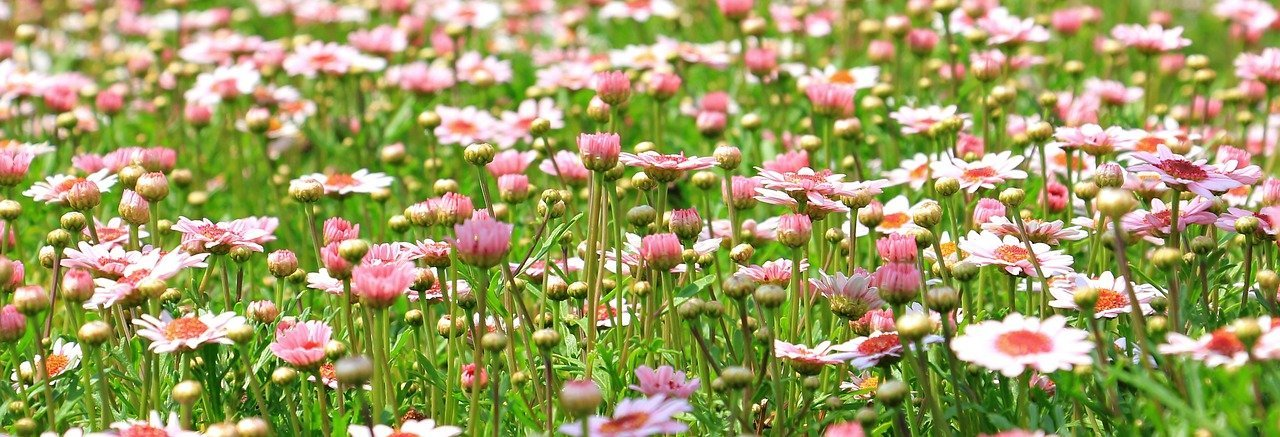 jardinerie Poullain Petit-Quevilly